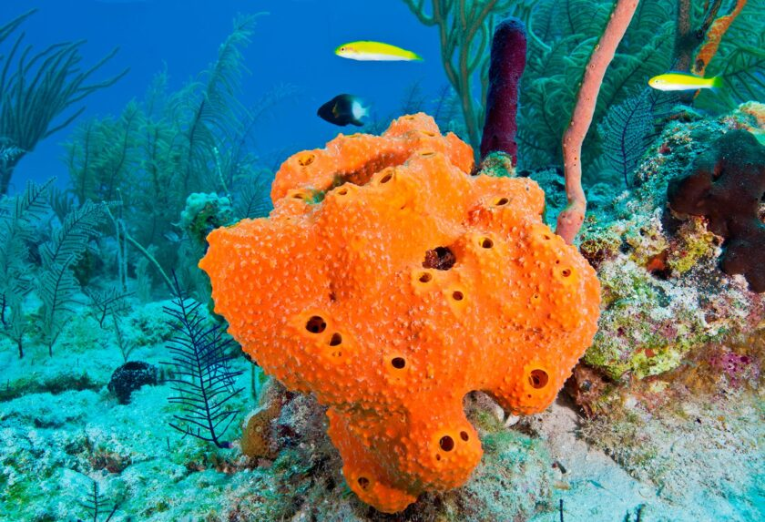 What is sponge: animal or plant?